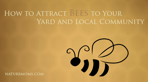 How to Attract Bees to Your Yard and Local Community