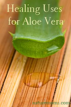 Healing Uses for Aloe Vera