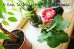 8 Easy to Grow Healthy Houseplants