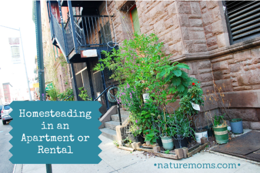 Homesteading in an Apartment, Condo or Rental