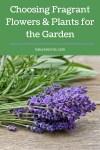 Choosing Fragrant Flowers & Plants for the Garden