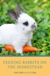 Feeding Rabbits on the Homestead