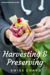 Harvesting and Preserving Swiss Chard