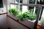 Tips on Creating An Indoor Herb Garden and Its Benefits
