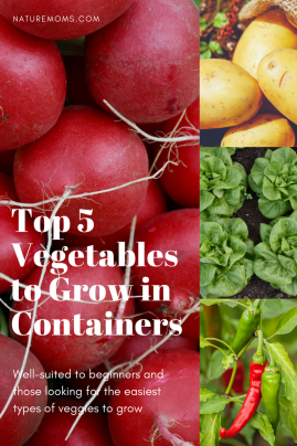 Top Vegetables to Grow in Containers
