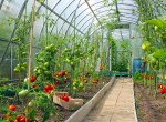 Greenhouses: Grow Food in Your Own Backyard