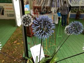 a decorative agapanthus flower