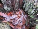 inside a stump
