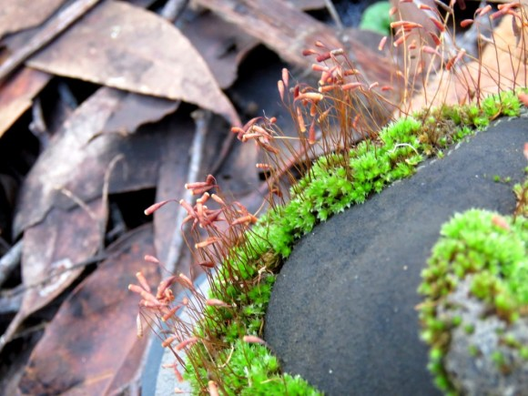 moss growing on a boot