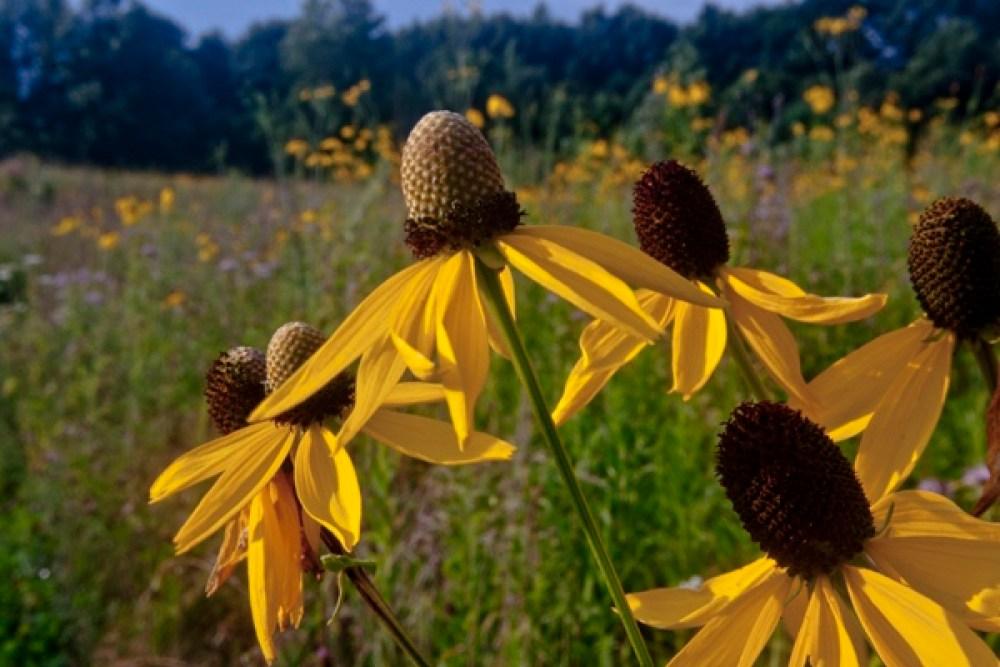 comm-1216-tallgrass-prairie