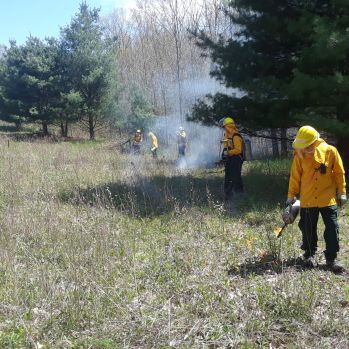 Burn crew members conduct a prescribed burn at Saul Lake Bog Nature Preserve