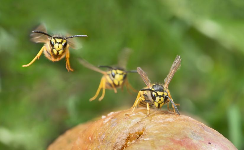 What is the purpose of wasps?