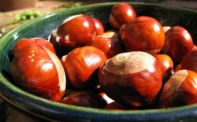 Are spiders afraid of conkers?