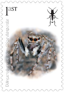 Spider stamp © Buglife