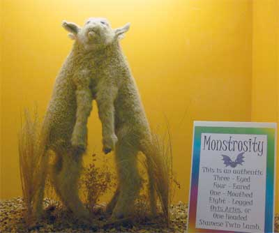 Monstrosity: the one-headed lamb