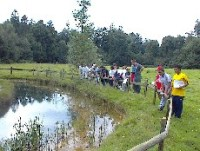 A fenced-off pond in a country park