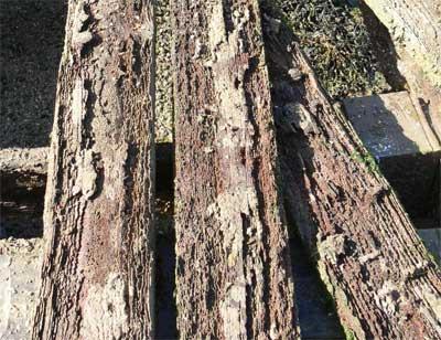 Gribble-eaten planks