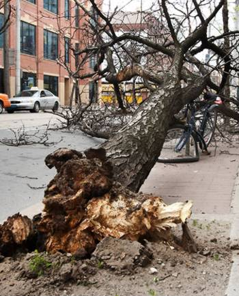 Tree fallen onto bicycle