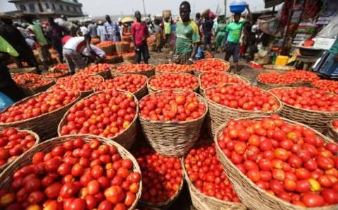 Blockage: Northern Tomato Farmers, Traders Lose Over N10Billion In One Week, Cries Out