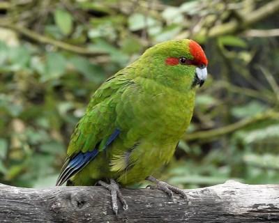 ランギトト島(+モトゥタプ島)の貴重な鳥類たちを写真で紹介!