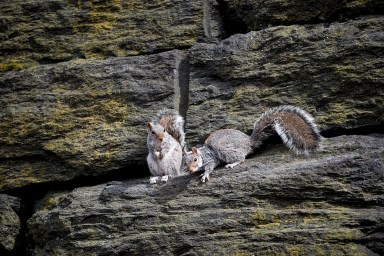 Squirrels lounge about watching the passing parade.