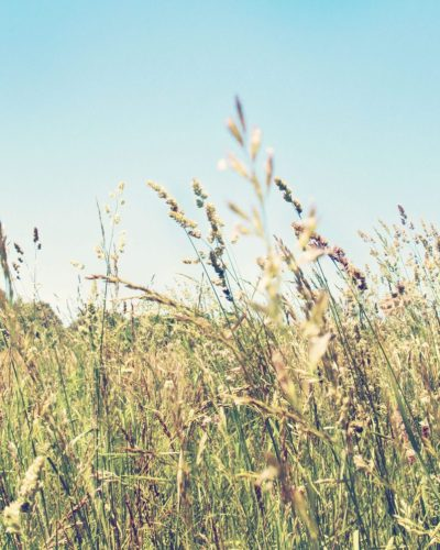 photo of tall grass in a field during summer in kenutcky