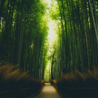訪日観光客から見ると日本はこう見えるらしい