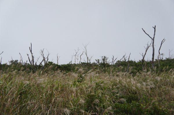 立ち枯れてしまった木々。その下からは新しい植物が育ってきている