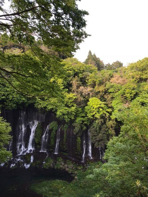 白糸の滝と周囲の緑