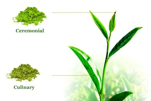 types of best matcha tea uk