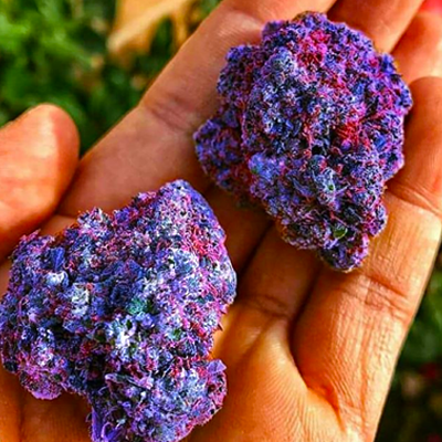 get paid to smoke weed