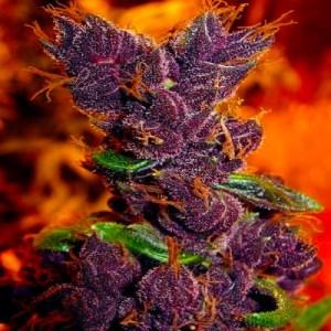 marijuana and type 1 diabetes