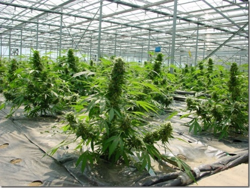 Get Your Certification To Become A Expert Grower - Marijuana Blog