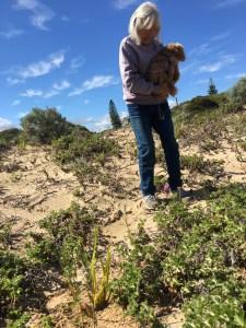 Sanddune planting