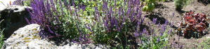 Natures Plan Landscape Architecture in Central Oregon