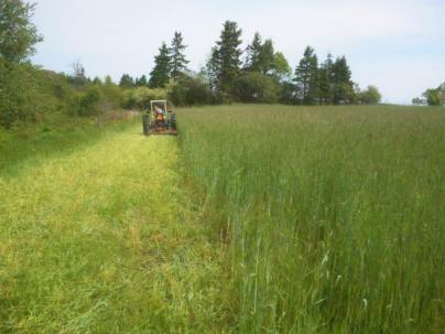 Week 24 - Jeremie mowing the fall rye cover crop.