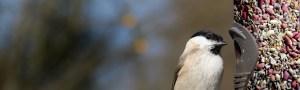 Image of bird at tube feeder