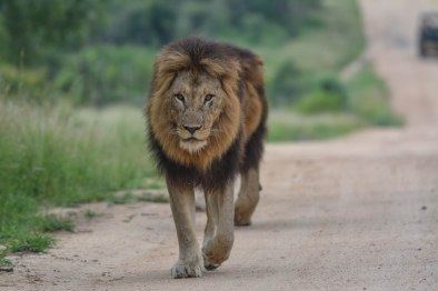 Skukuza Half Marathon & Kruger park Safari with Nature Travel Active