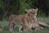 Masai Mara Marathon & Kenya Safari