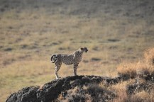 Kilimanjaro Marathon & Tanzania Safari with Nature Travel Active