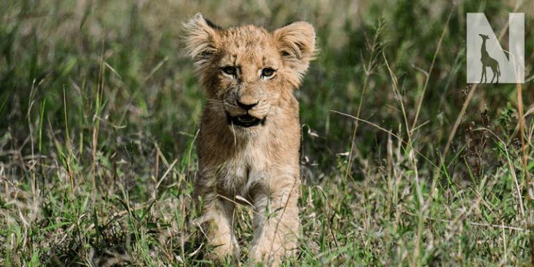 FEATURED-SAFARI-HEAD.png