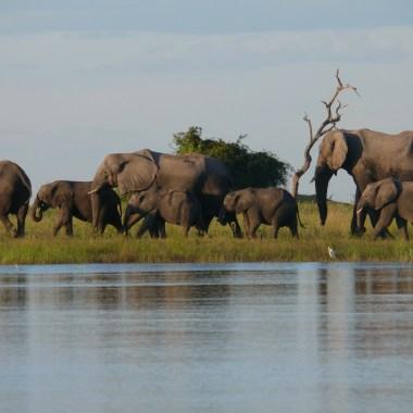 Vic Falls and Botswana