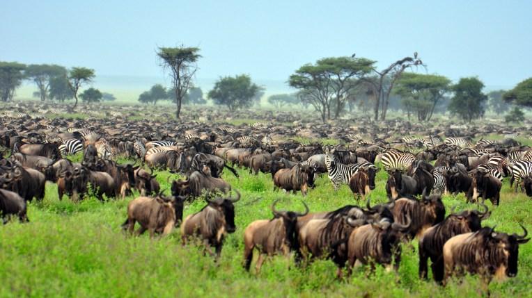 Serengeti (6)