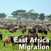 YMA--east-africa-Africa