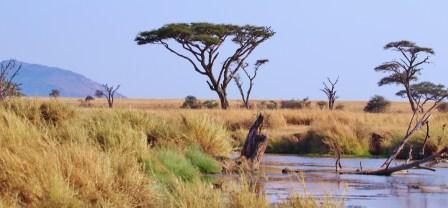 Serengeti (11)