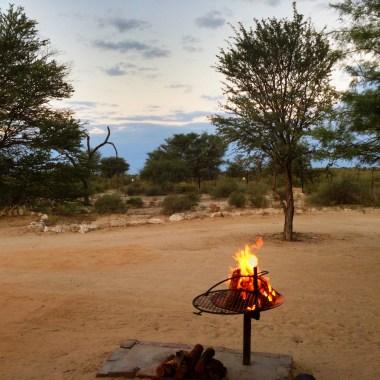 Best of Kalahari Safari