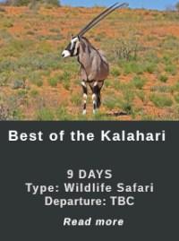 Best-of-the-Kalahari