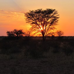 Kalahari-sunset