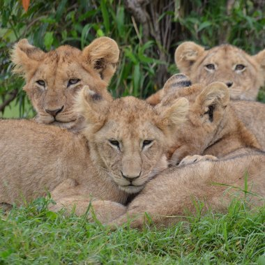 Best of Kenya Wildlife