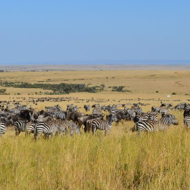 Best of Kenya Wildlife Safari